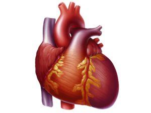 Причины и признаки сердечной недостаточности