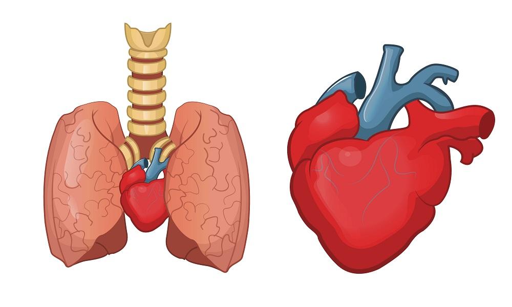 Легочное сердце что это такое симптомы и лечение прогноз и рекомендации