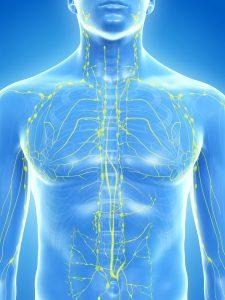 Лимфатическая система человека: строение и функции