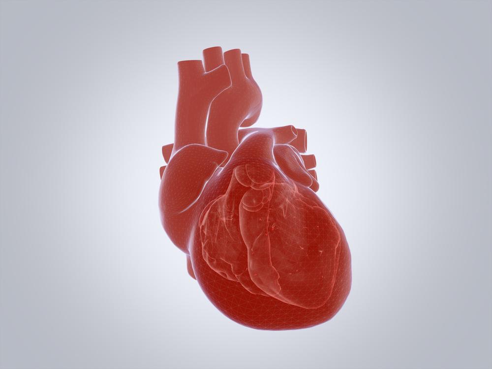 Строение сердца человека: схема, круги кровообращения, работа