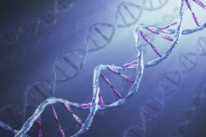 Внезапная сердечная смерть запрограммирована генетически