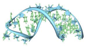 Ученые открыли белок, продлевающий жизнь